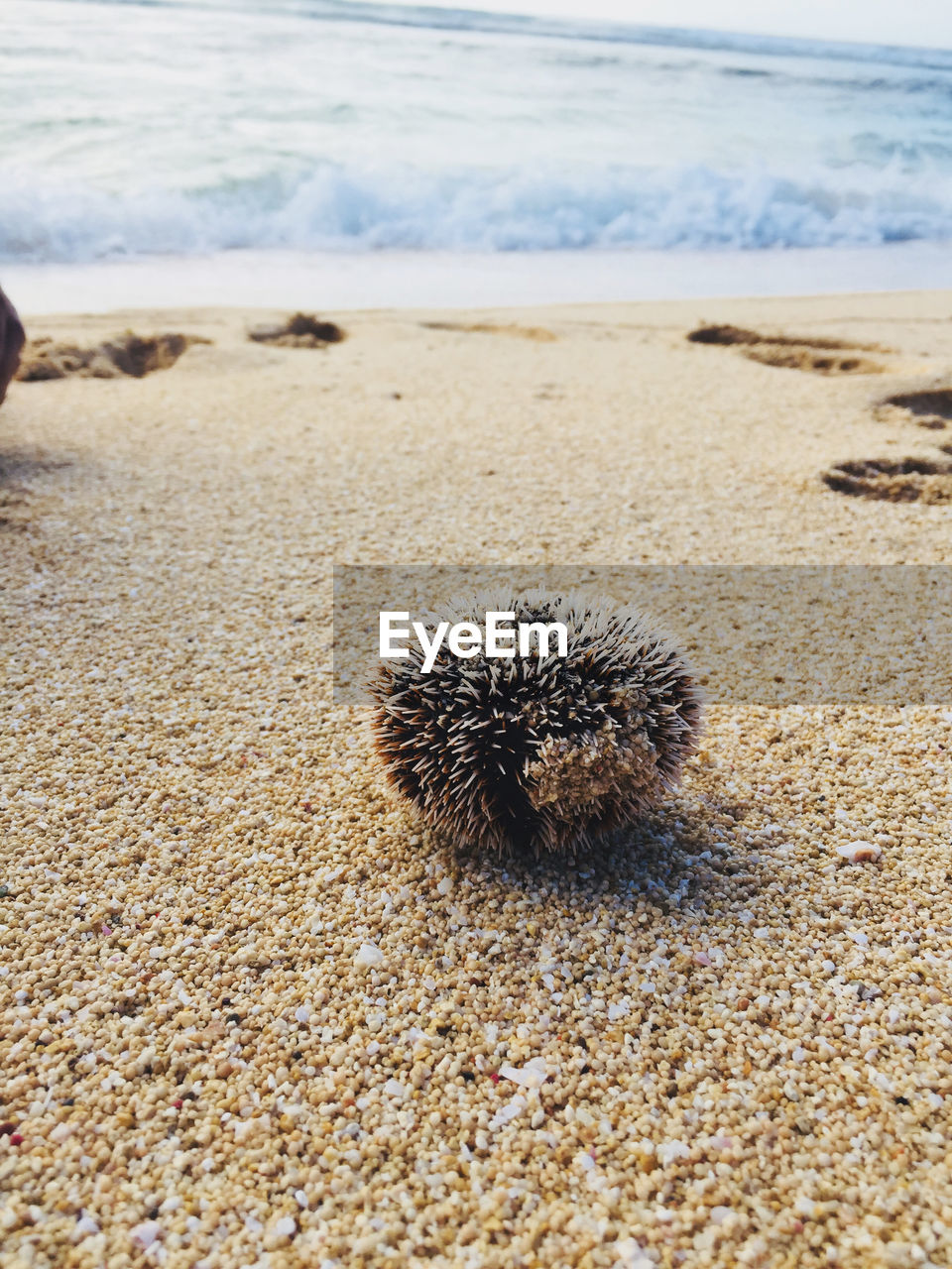 Sea urchin on and at beach