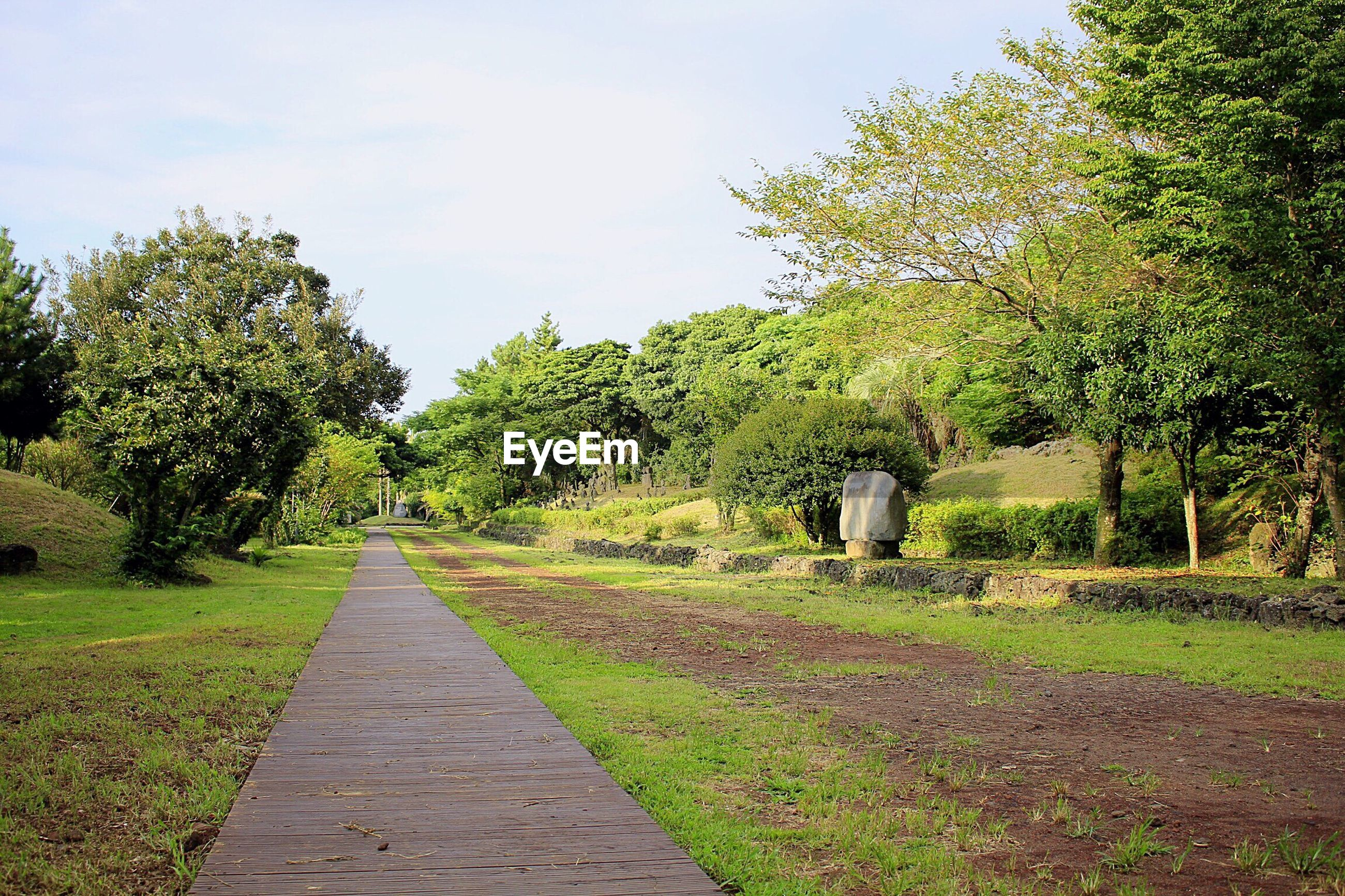 tree, the way forward, grass, growth, pathway, tranquil scene, tranquility, diminishing perspective, footpath, narrow, long, walkway, plant, green color, day, nature, treelined, park - man made space, sky, scenics, outdoors, branch, solitude, beauty in nature, pedestrian walkway, green, park, surface level, non-urban scene, vanishing point