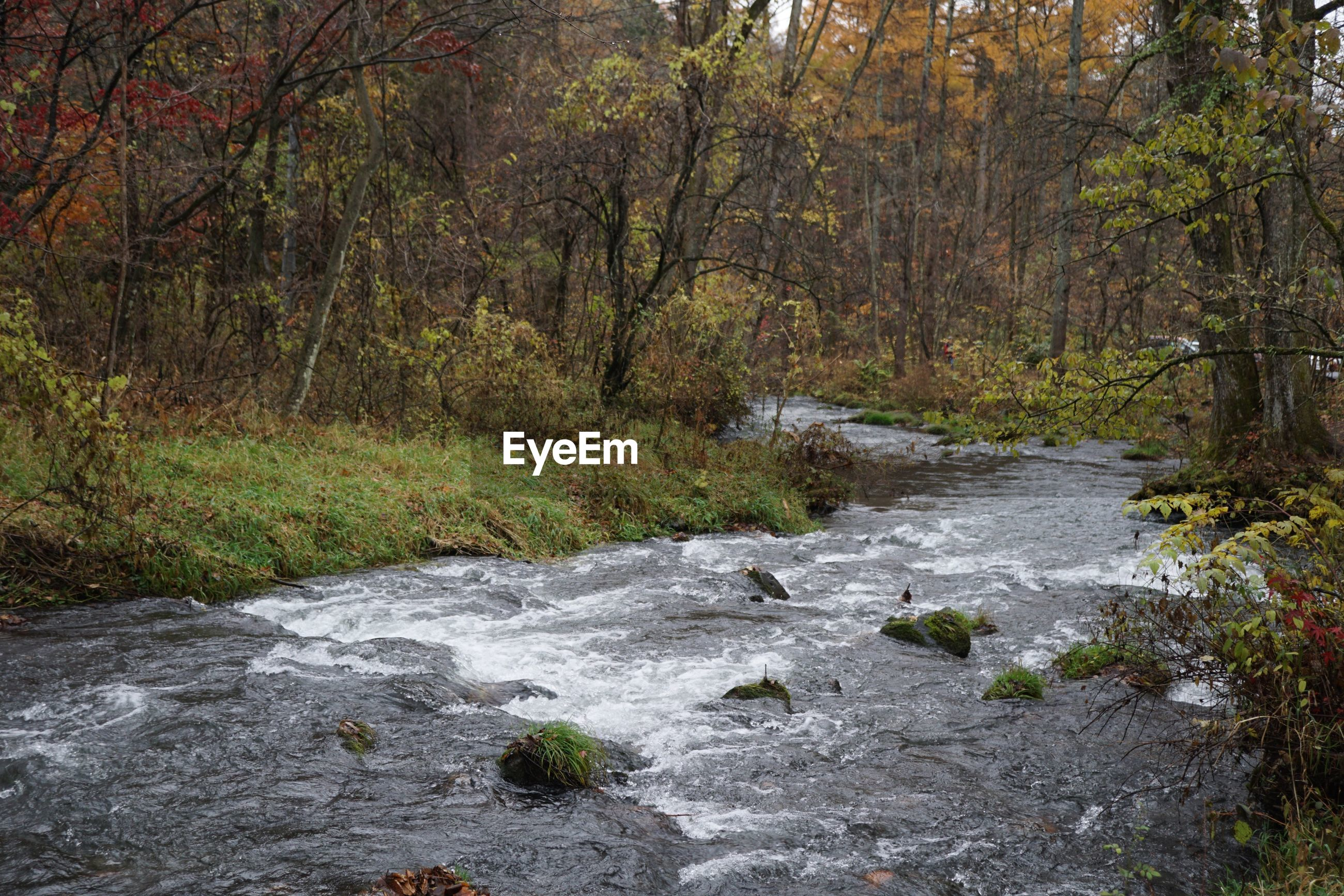 forest, tree, land, water, flowing water, plant, nature, no people, river, day, motion, scenics - nature, flowing, beauty in nature, rock, stream - flowing water, rock - object, solid, tranquility, outdoors, woodland