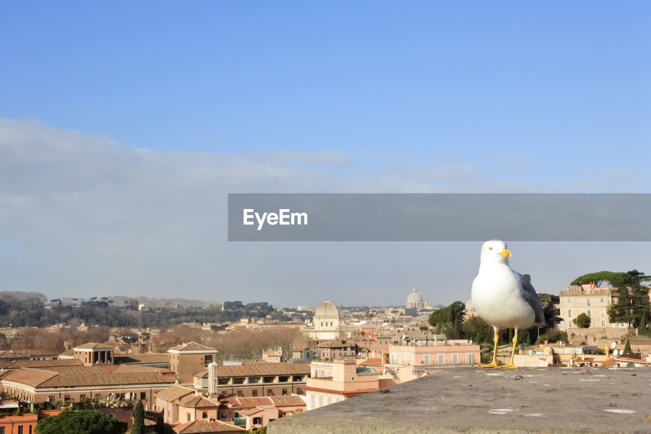bird, built structure, architecture, building exterior, day, one animal, sky, animal themes, outdoors, no people, seagull, place of worship, spirituality, animals in the wild, perching, nature, cityscape, city