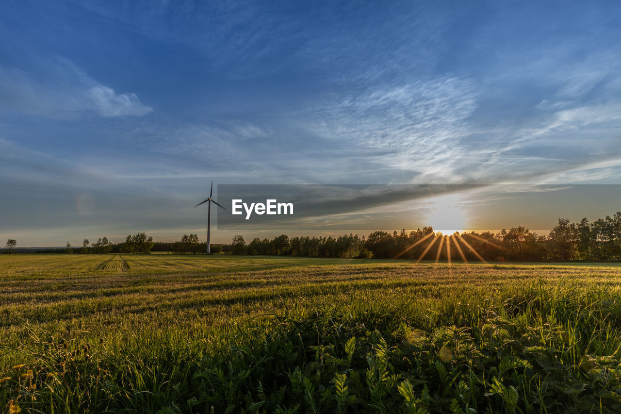 sky, environment, field, landscape, land, beauty in nature, plant, cloud - sky, rural scene, agriculture, scenics - nature, sunset, wind turbine, sun, turbine, fuel and power generation, growth, tranquility, nature, environmental conservation, no people, outdoors, lens flare