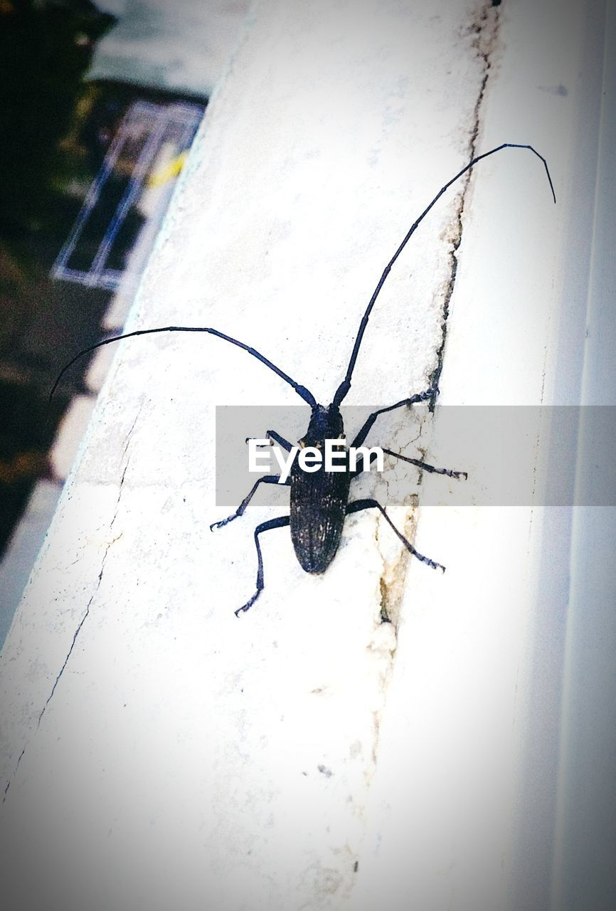 invertebrate, insect, animal themes, animals in the wild, animal wildlife, one animal, animal, close-up, no people, day, animal body part, outdoors, arthropod, wall - building feature, glass - material, window, vignette, high angle view, arachnid
