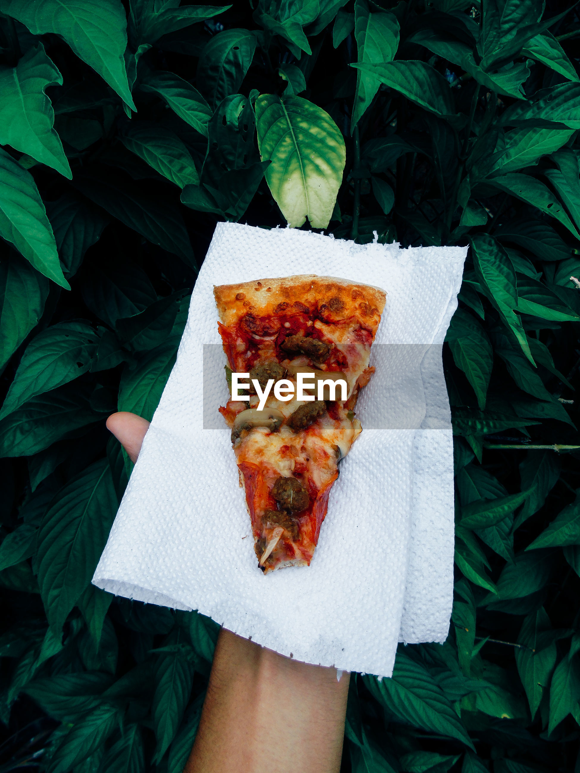 Cropped hand holding pizza by plants