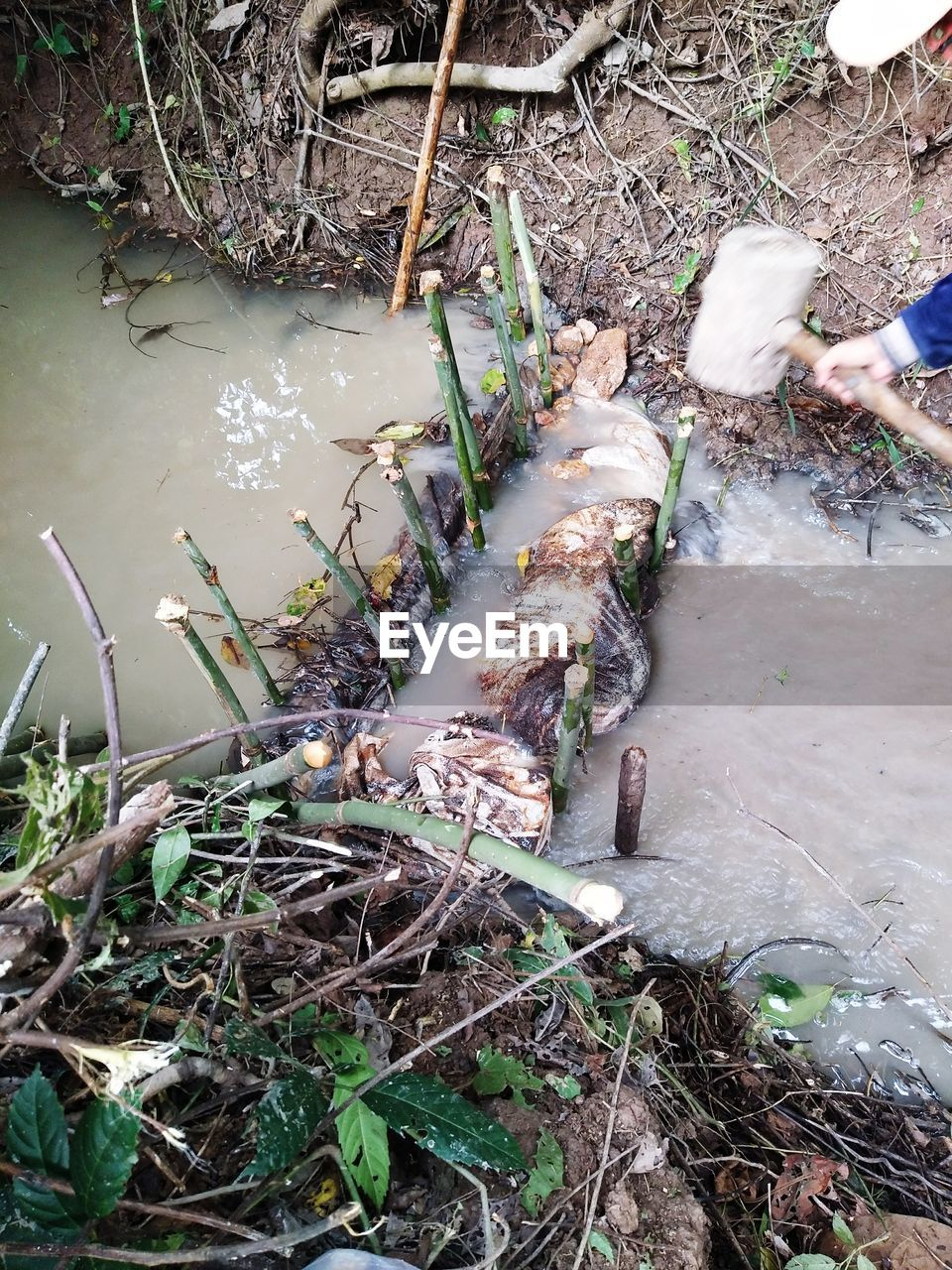 water, plant, nature, day, high angle view, human body part, land, outdoors, real people, plant part, leaf, forest, growth, river, people, body part, dirt, stick - plant part, human foot