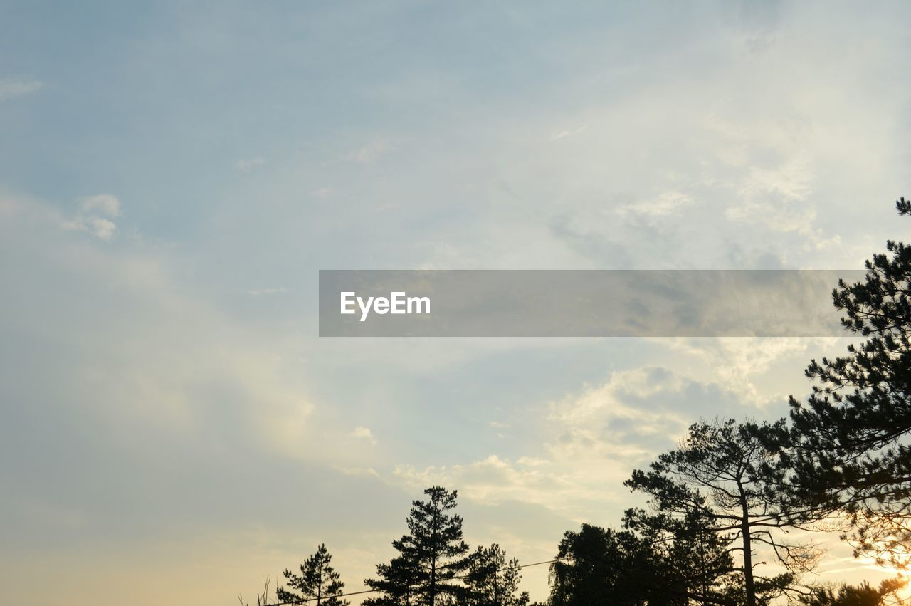 LOW ANGLE VIEW OF TREES AGAINST CLOUDS