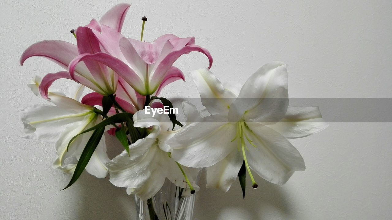 flowering plant, flower, plant, petal, freshness, beauty in nature, fragility, vulnerability, white color, inflorescence, close-up, flower head, indoors, wall - building feature, no people, nature, studio shot, pink color, white background, vase, flower arrangement