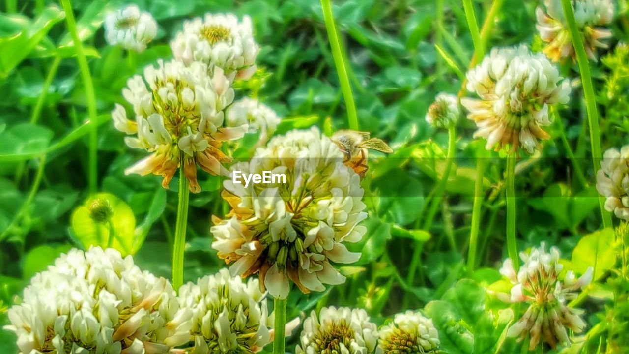 flower, nature, insect, beauty in nature, growth, plant, petal, animal themes, one animal, fragility, bee, animals in the wild, freshness, flower head, pollination, honey bee, no people, symbiotic relationship, blooming, outdoors, animal wildlife, day, yellow, buzzing, close-up