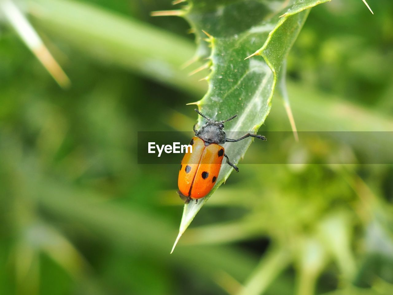 animal themes, animal, invertebrate, animal wildlife, one animal, insect, animals in the wild, plant, close-up, green color, focus on foreground, ladybug, beetle, plant part, beauty in nature, no people, nature, leaf, day, growth, small