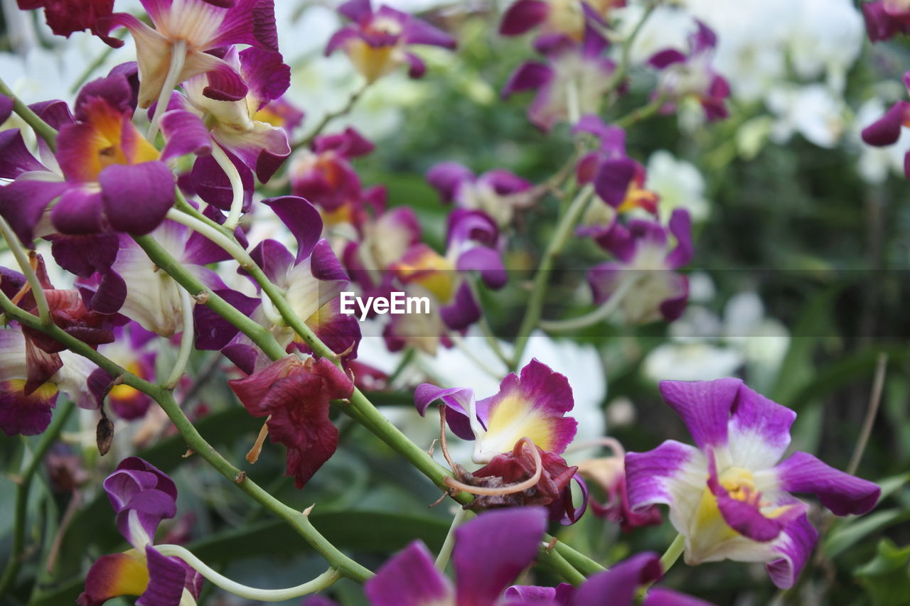 flowering plant, flower, plant, freshness, growth, beauty in nature, vulnerability, fragility, close-up, petal, nature, no people, purple, day, inflorescence, flower head, selective focus, focus on foreground, plant part, outdoors