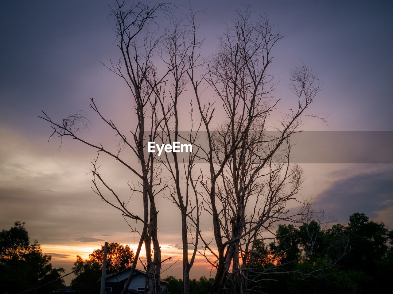 sky, tree, sunset, plant, scenics - nature, silhouette, beauty in nature, tranquil scene, cloud - sky, tranquility, bare tree, no people, orange color, nature, non-urban scene, idyllic, branch, outdoors, dusk, land