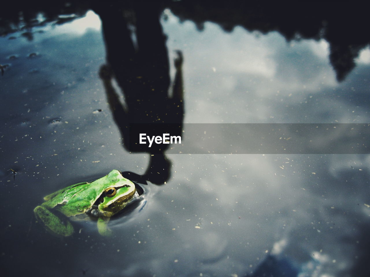 High angle view of man reflecting by frog in water