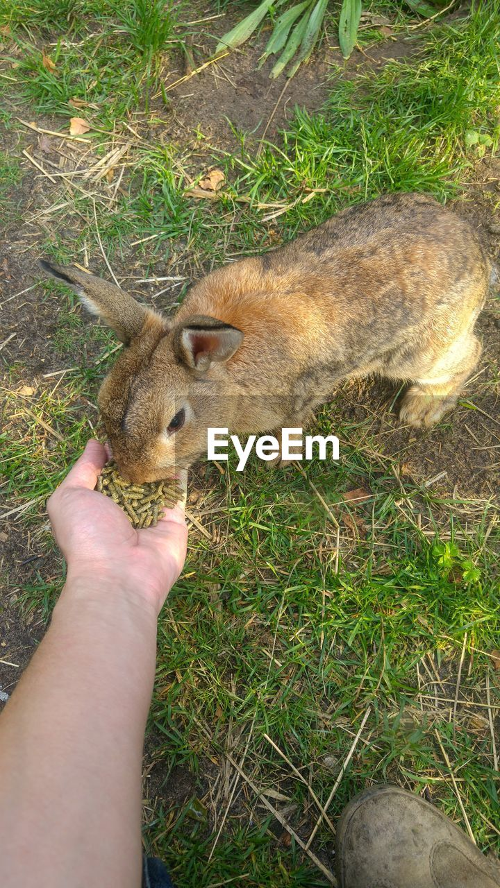 human hand, human body part, real people, one animal, one person, holding, animal themes, human finger, unrecognizable person, mammal, outdoors, day, high angle view, field, lifestyles, animals in the wild, grass, domestic animals, nature, close-up, people