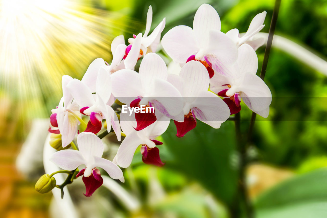 flower, petal, beauty in nature, nature, fragility, freshness, growth, plant, focus on foreground, day, no people, flower head, close-up, outdoors, blooming