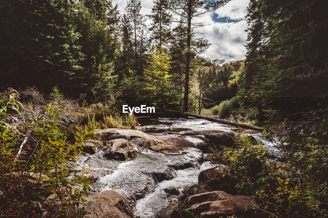 tree, plant, forest, beauty in nature, water, flowing water, land, scenics - nature, nature, motion, no people, rock, flowing, growth, non-urban scene, rock - object, day, solid, tranquility, outdoors, stream - flowing water, woodland