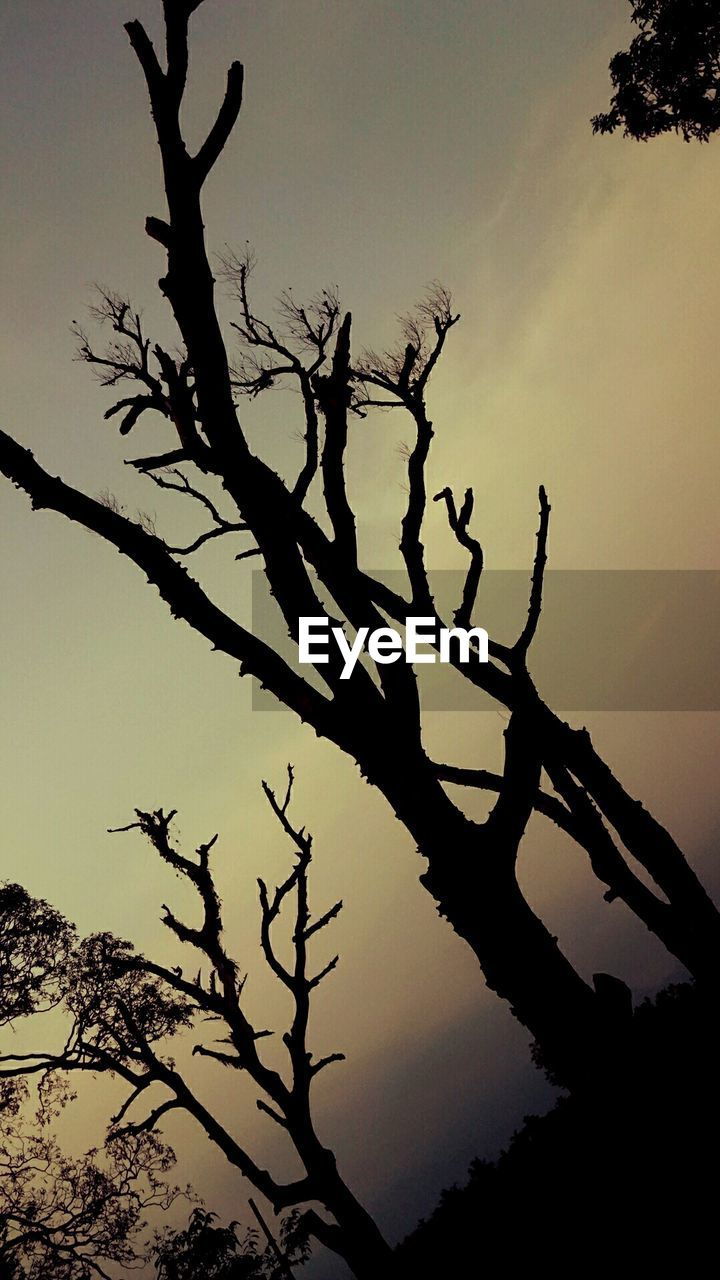 tree, silhouette, branch, nature, low angle view, sunset, outdoors, bare tree, no people, sky, tree trunk, tranquility, beauty in nature, dead tree, growth, day, scenics, clear sky