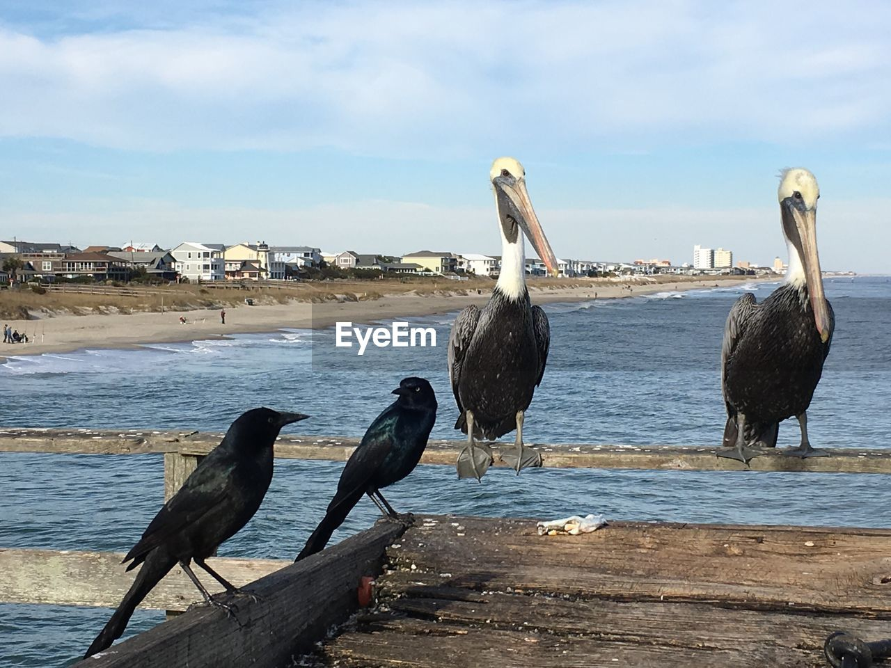 bird, animals in the wild, animal themes, water, perching, nature, animal wildlife, sky, day, outdoors, no people, cloud - sky, sea, beauty in nature, pelican