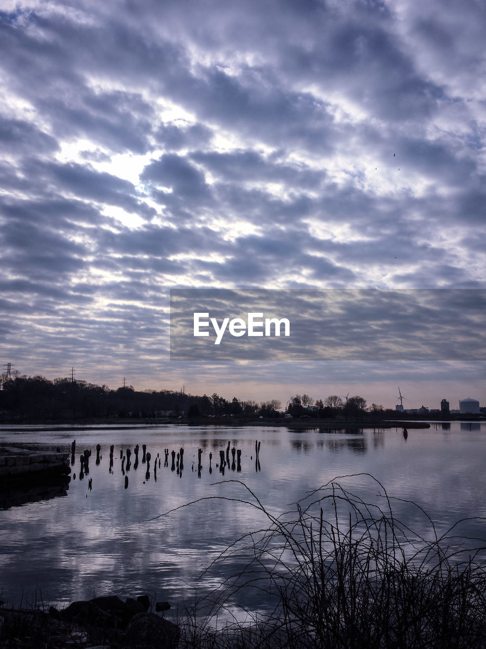 water, lake, sky, nature, beauty in nature, cloud - sky, tranquil scene, scenics, tranquility, outdoors, tree, no people, day, bird, swan