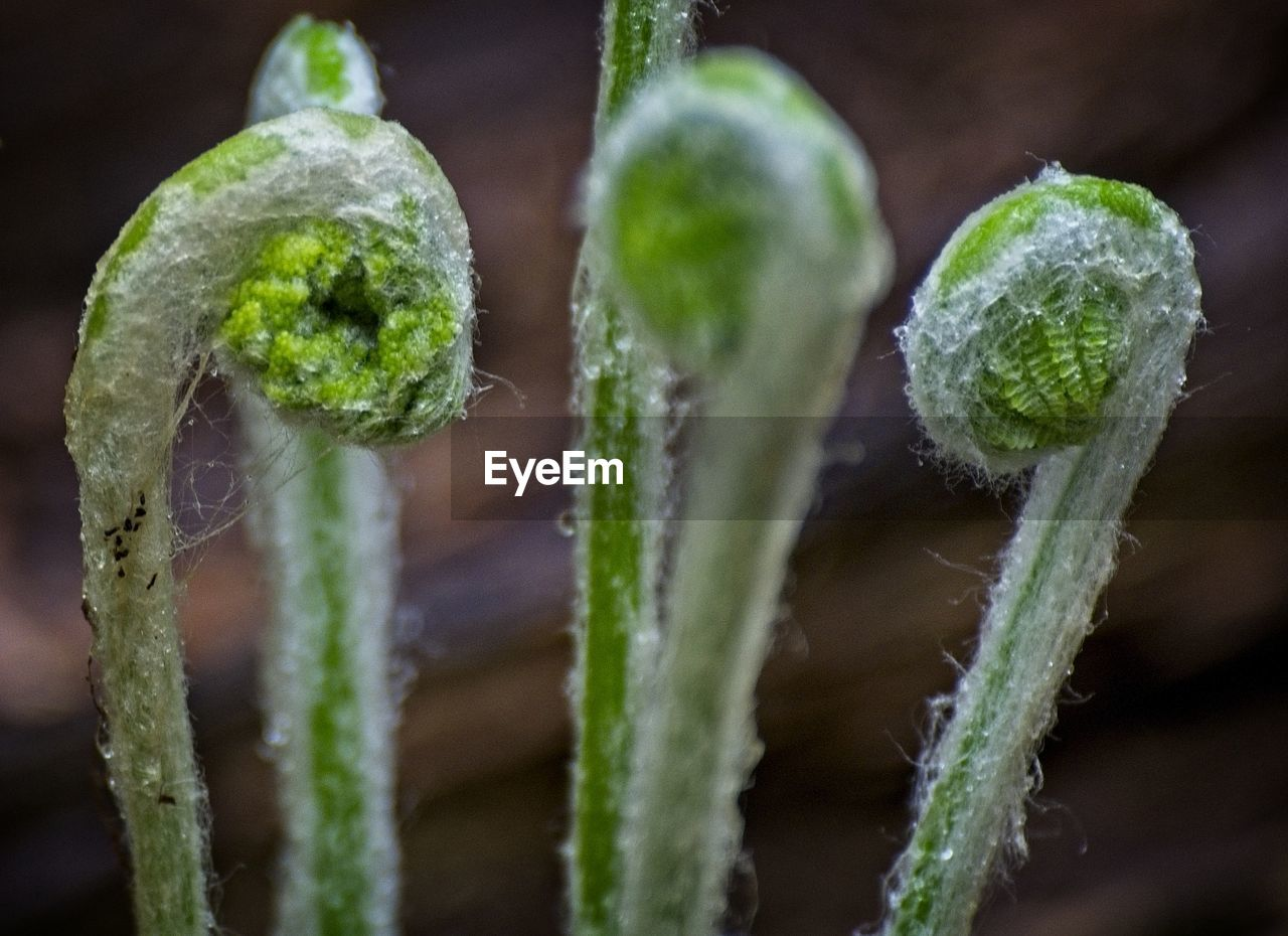 plant, close-up, growth, green color, no people, focus on foreground, beauty in nature, freshness, fragility, vulnerability, nature, bud, flower, selective focus, day, plant stem, outdoors, food, flowering plant, beginnings