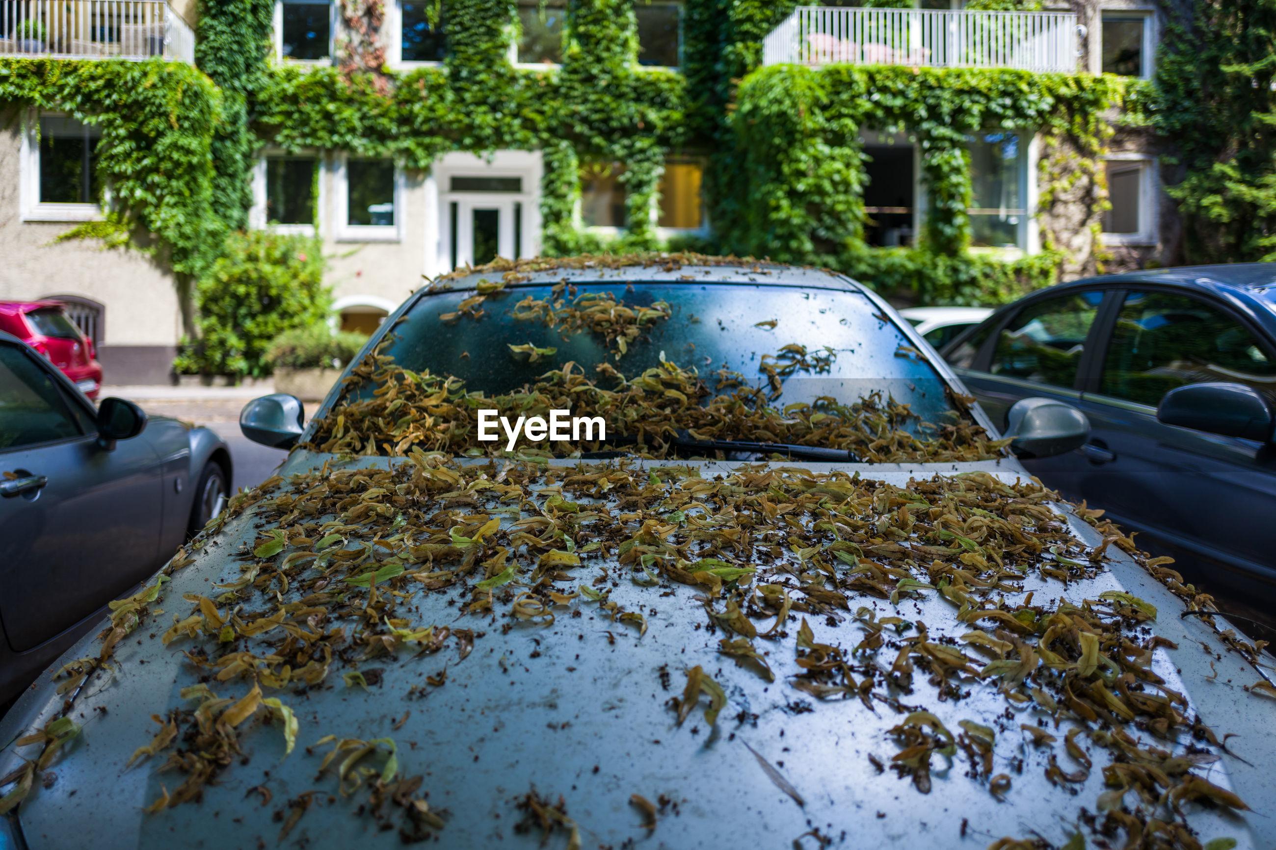 Leaves on car on street