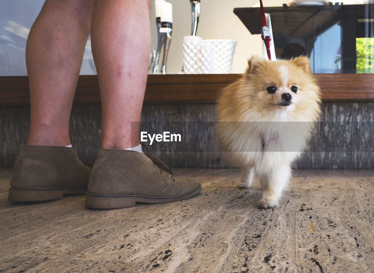 Low Section Of Man Standing By Pomeranian On Floor
