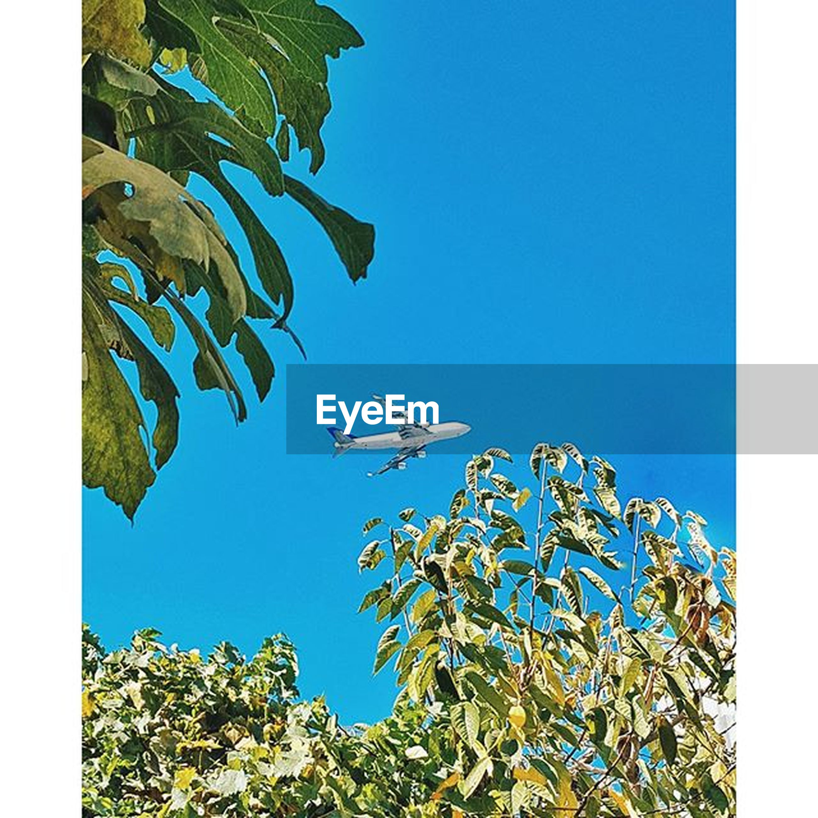 clear sky, transfer print, blue, low angle view, auto post production filter, leaf, tree, growth, copy space, nature, branch, plant, beauty in nature, green color, day, outdoors, no people, tranquility, close-up, high section