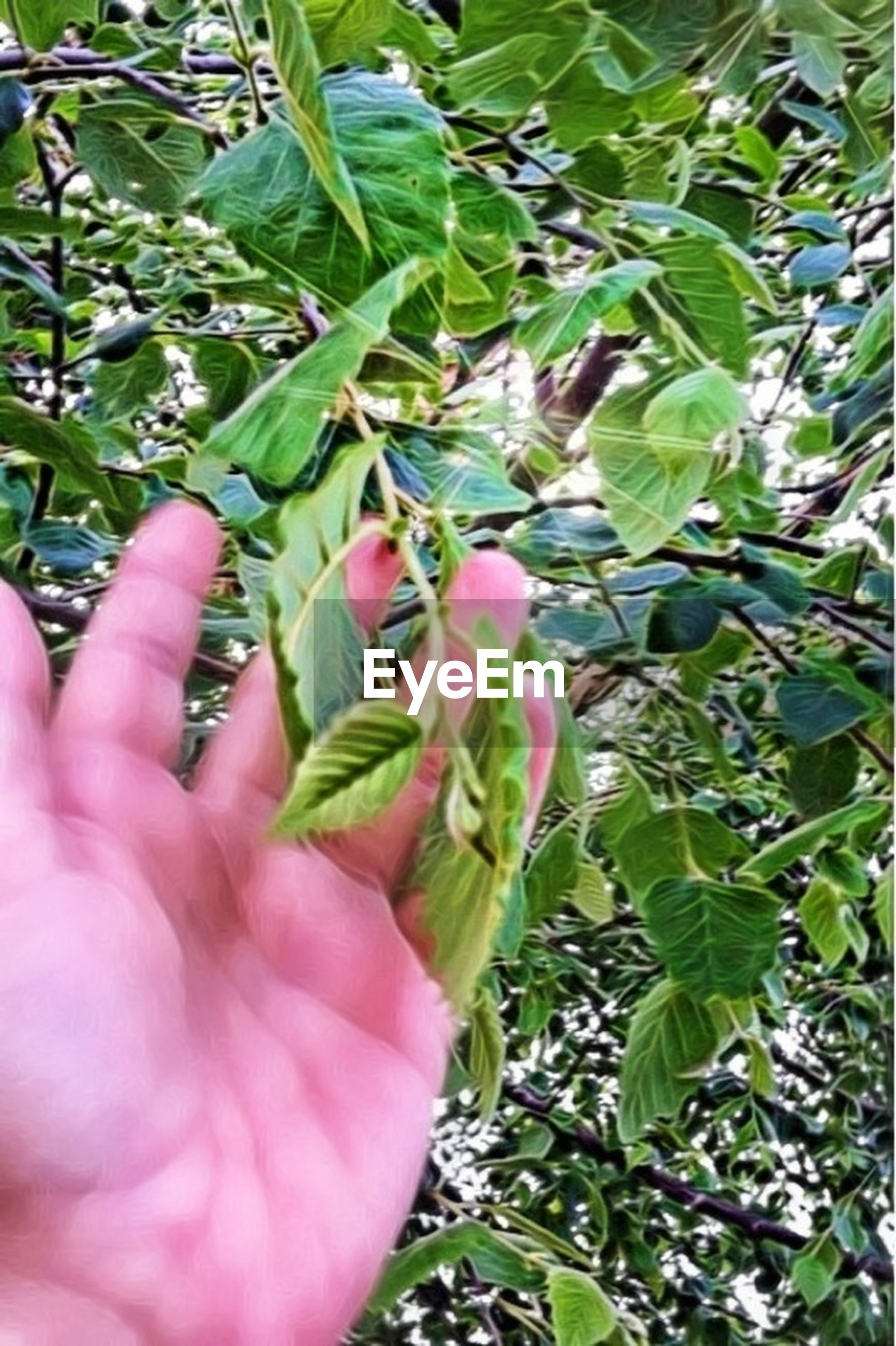 person, part of, holding, cropped, human finger, leaf, personal perspective, growth, unrecognizable person, plant, flower, close-up, green color, nature, freshness, pink color, lifestyles
