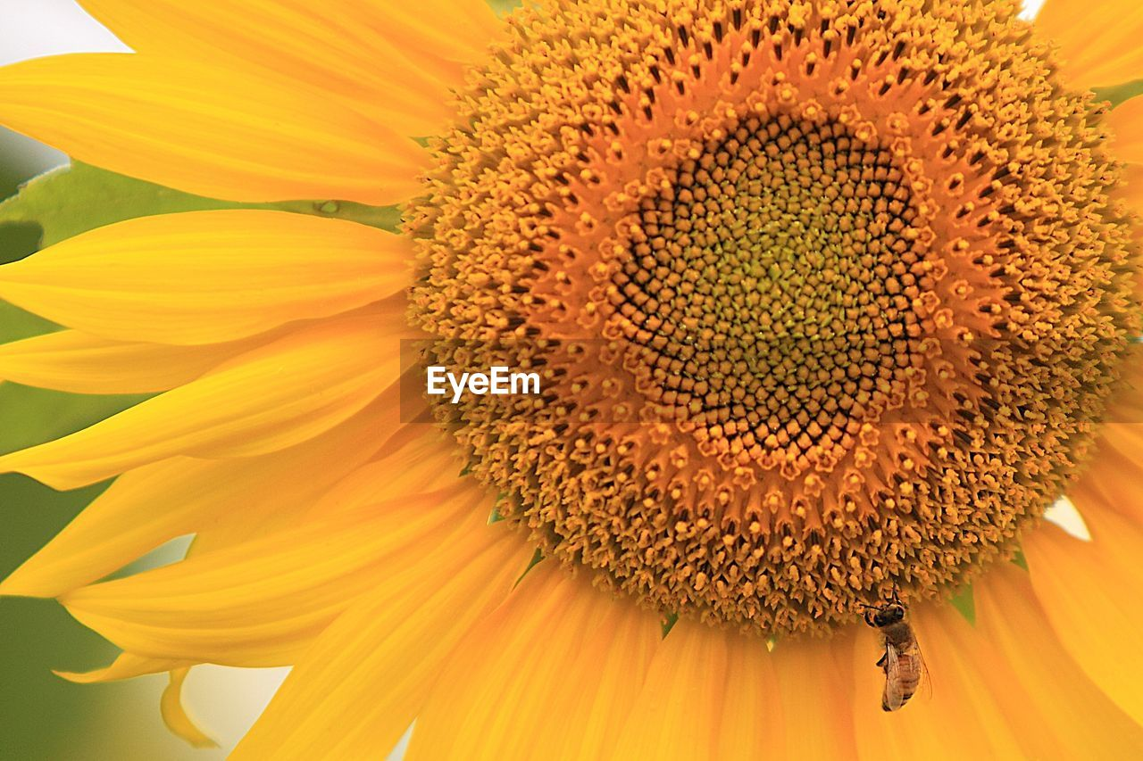 flower, flowering plant, flower head, petal, freshness, vulnerability, fragility, inflorescence, beauty in nature, plant, close-up, growth, sunflower, pollen, yellow, no people, nature, seed, day