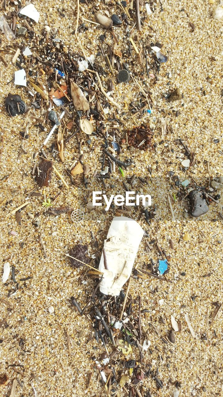 land, high angle view, nature, day, no people, beach, outdoors, animal, pollution, animal wildlife, garbage, field, water, animal themes, shell, close-up, sunlight, group of animals, solid, sea