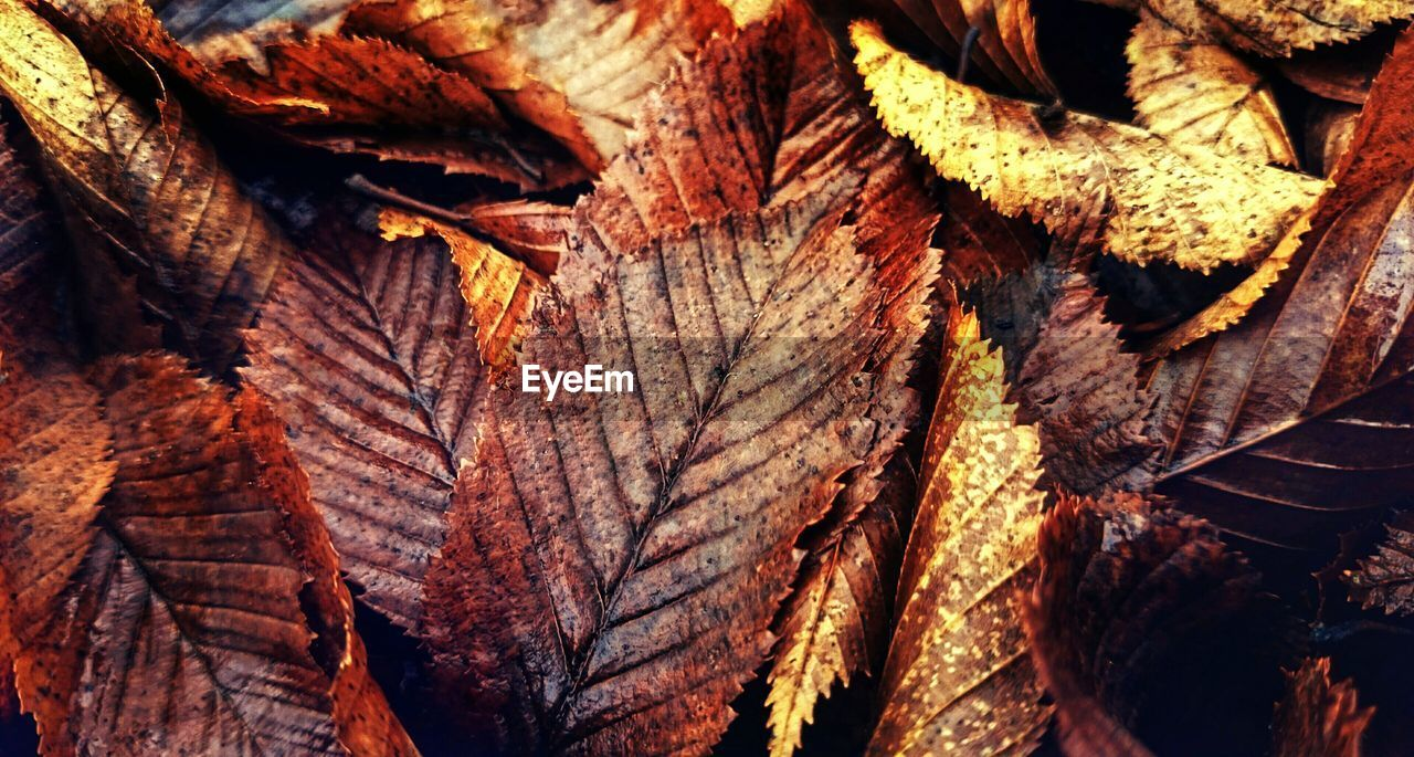 full frame, wood - material, close-up, backgrounds, textured, no people, nature, tree, leaf, plant part, brown, day, pattern, plant, wood, dry, natural pattern, outdoors, log, rough, change, leaves, natural condition