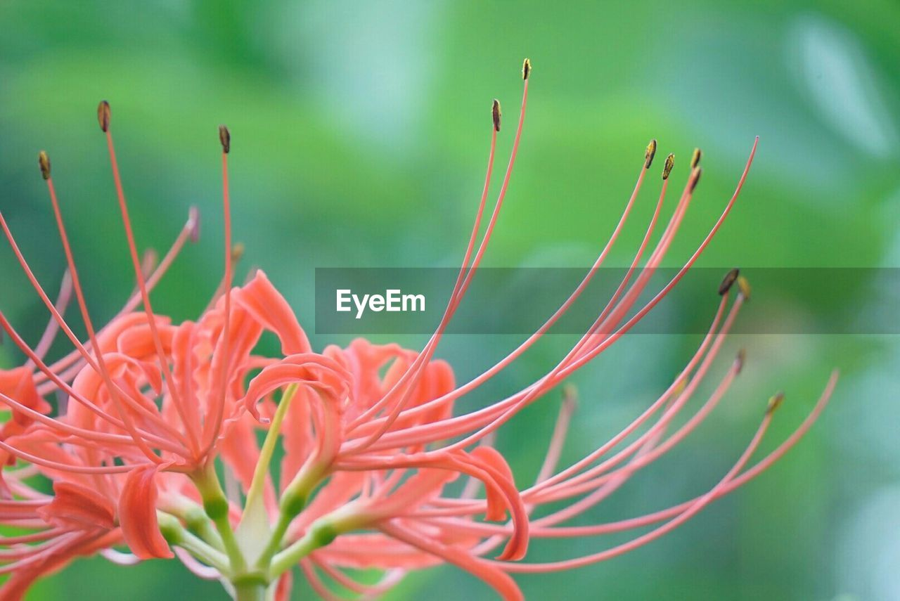 growth, beauty in nature, nature, plant, flower, red, fragility, close-up, no people, green color, day, freshness, outdoors, flower head