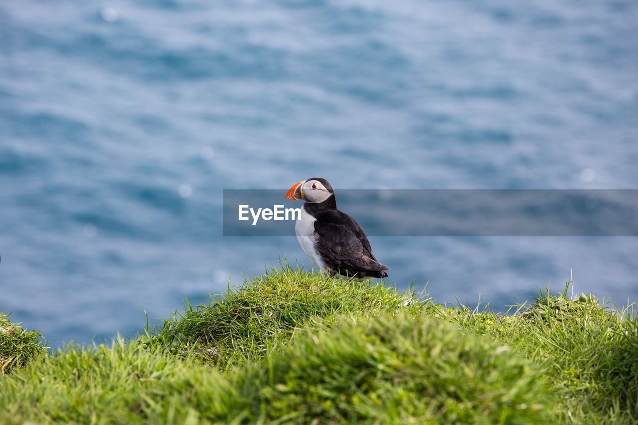 animal themes, animal, one animal, bird, water, vertebrate, animals in the wild, animal wildlife, plant, no people, nature, grass, day, selective focus, green color, outdoors, lake, perching, black color, animal head