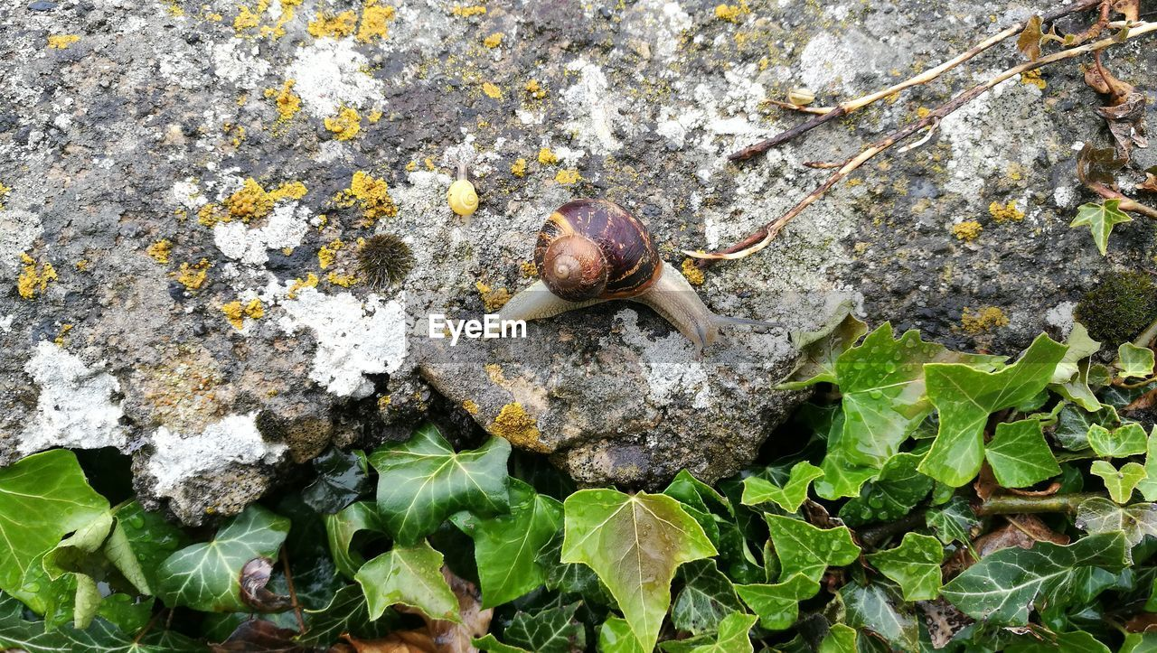 animal wildlife, animal, animal themes, invertebrate, animals in the wild, mollusk, gastropod, one animal, snail, shell, nature, leaf, plant part, animal shell, day, no people, close-up, plant, beauty in nature, growth, outdoors, small
