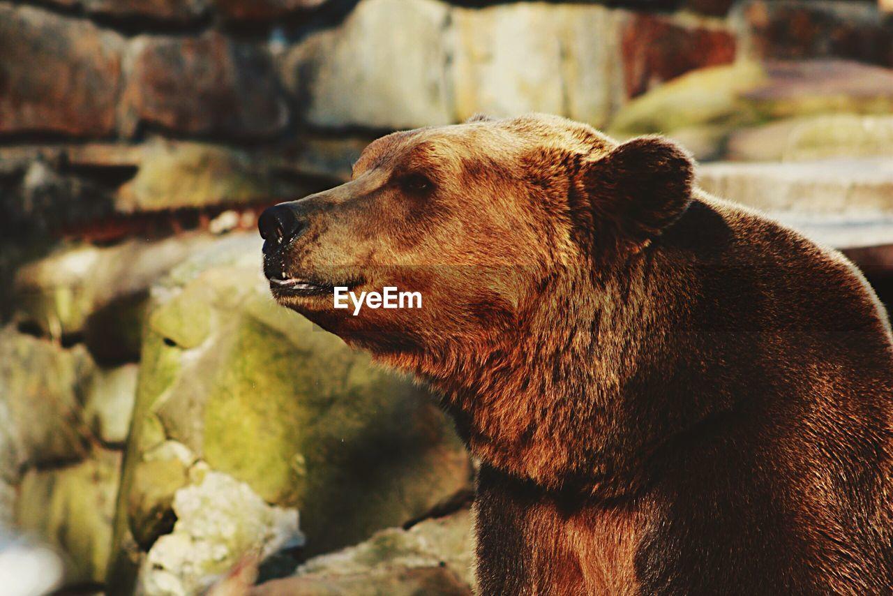 Portrait Of Bear In Zoo