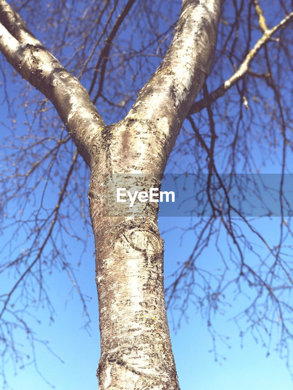 tree, branch, tree trunk, bare tree, nature, day, outdoors, sunlight, low angle view, beauty in nature, tranquility, no people, sky, growth, clear sky, close-up