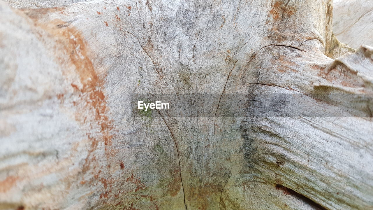 close-up, tree trunk, backgrounds, full frame, trunk, textured, no people, tree, day, rough, plant, pattern, wood - material, plant bark, nature, natural pattern, outdoors, weathered, focus on foreground, bark