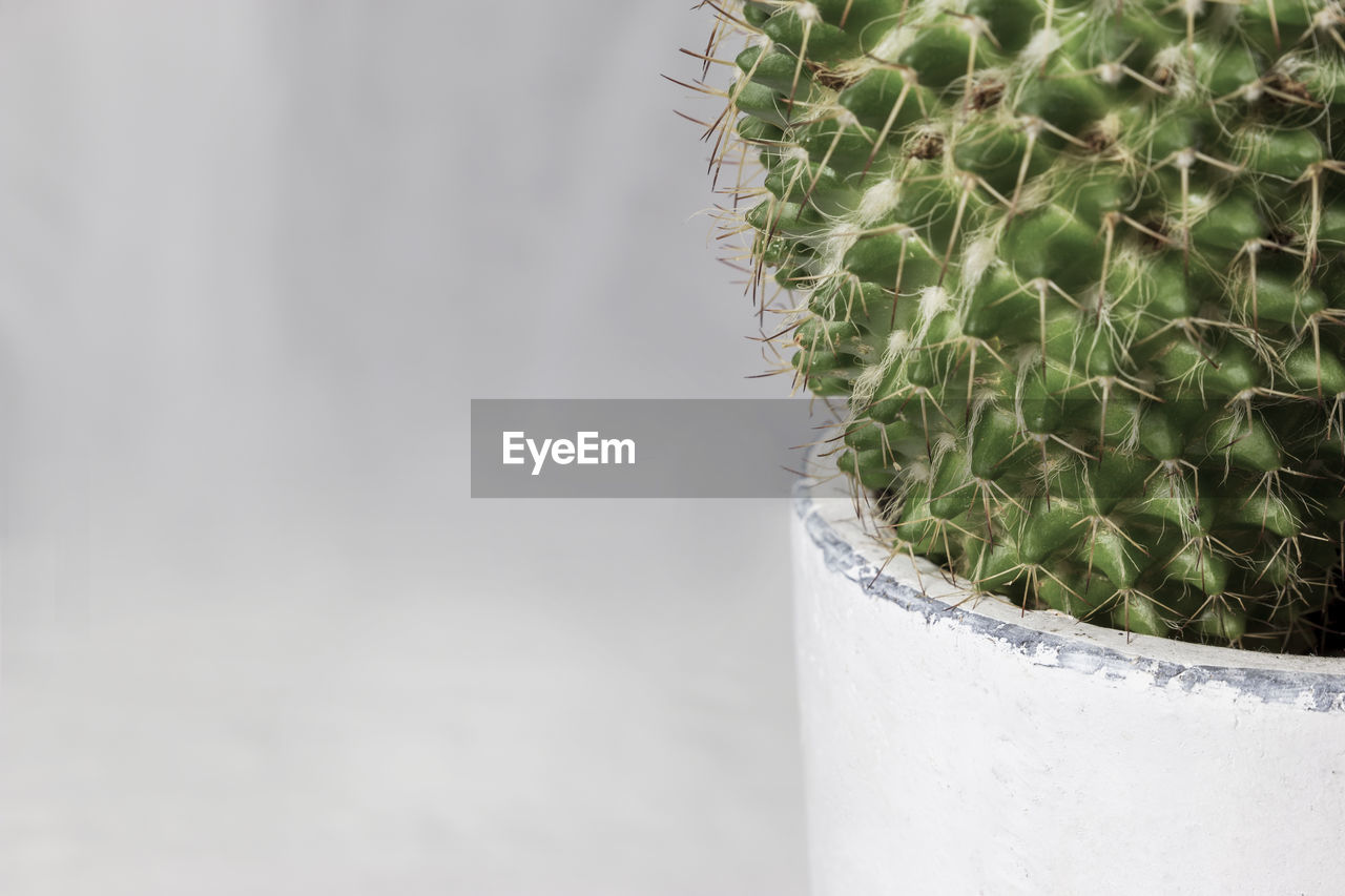 green color, close-up, no people, succulent plant, day, food and drink, focus on foreground, nature, growth, outdoors, cactus, food, thorn, household equipment, drink, plant, potted plant, glass, refreshment, copy space, temptation