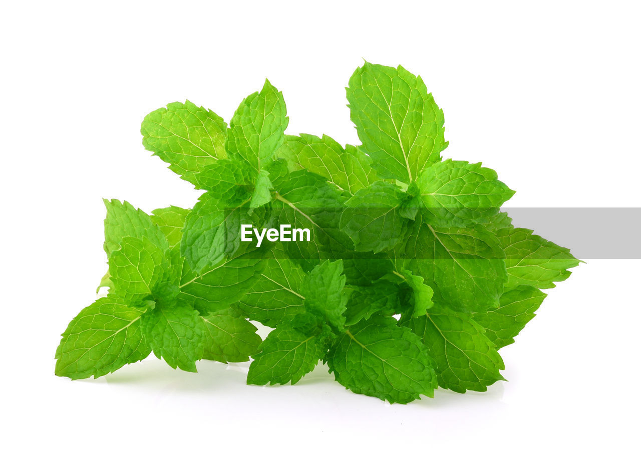 leaf, plant part, green color, white background, food and drink, herb, studio shot, food, freshness, indoors, close-up, cut out, mint leaf - culinary, wellbeing, no people, healthy eating, nature, plant, herbal medicine, still life, leaves