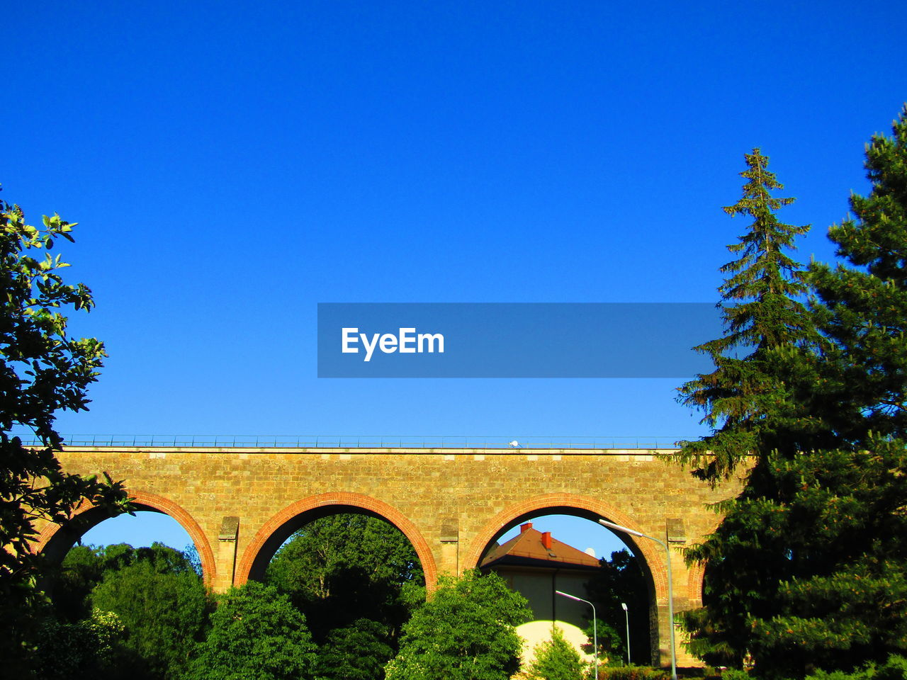 arch, architecture, tree, clear sky, blue, growth, day, no people, outdoors, nature