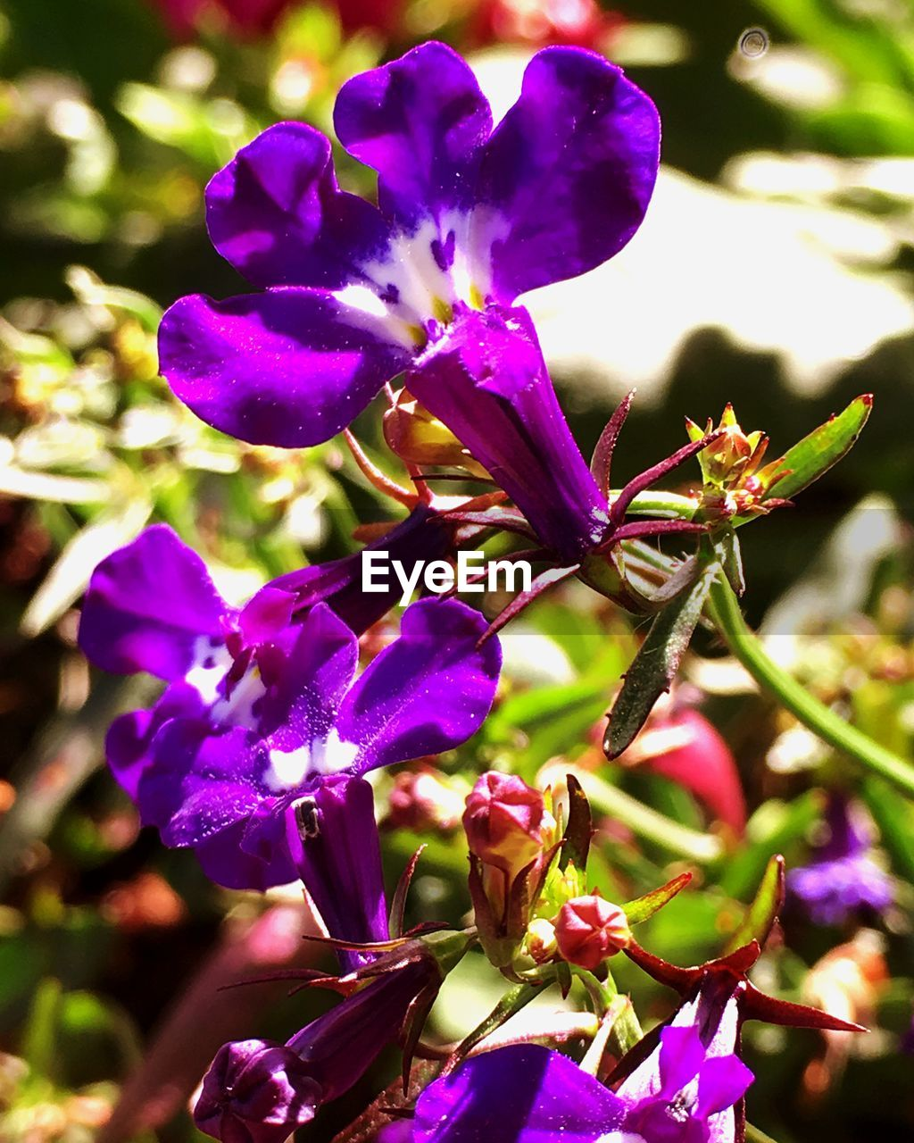 growth, beauty in nature, nature, flower, fragility, petal, purple, freshness, outdoors, no people, plant, day, close-up, flower head, tree