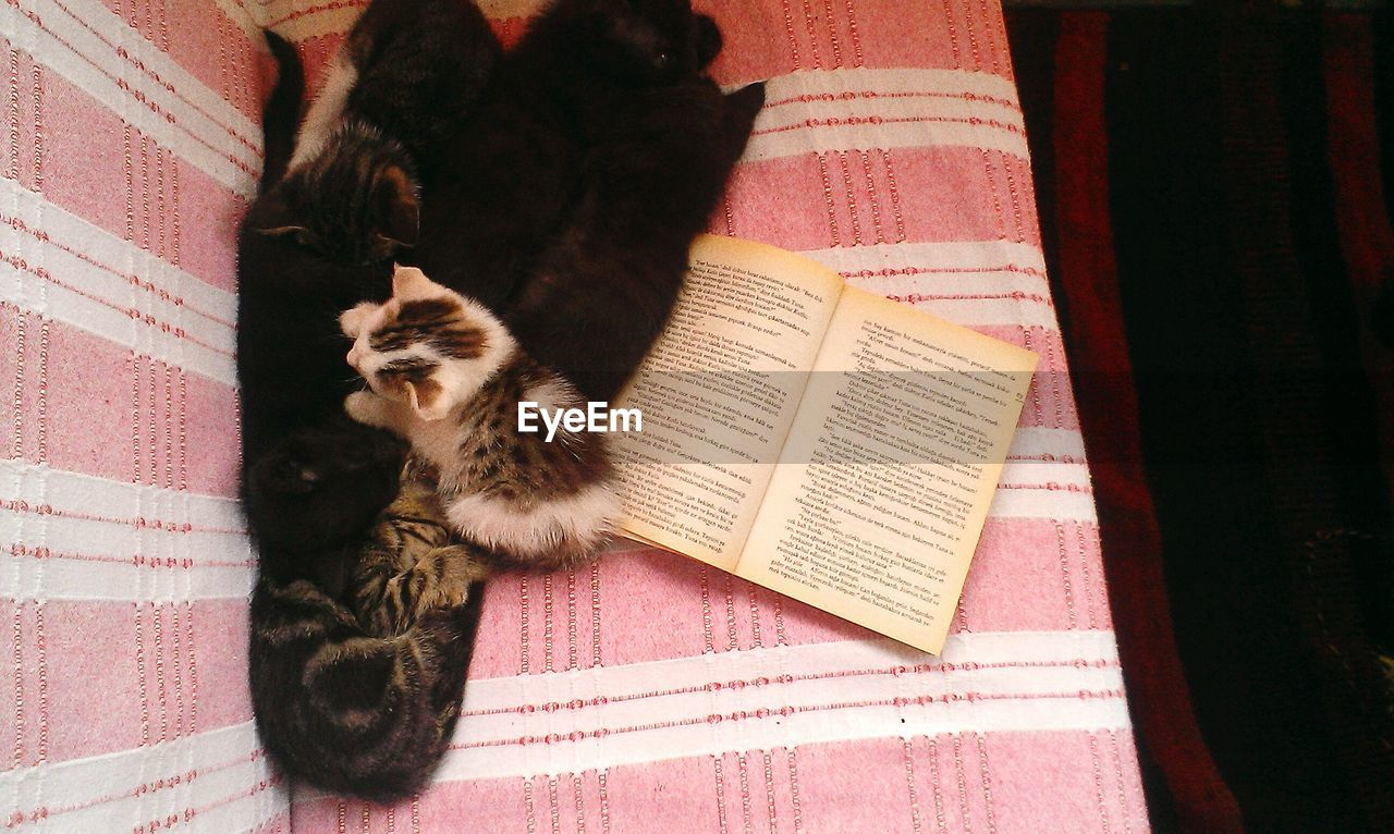 domestic cat, pets, domestic animals, mammal, animal themes, book, indoors, feline, cat, one animal, no people, home interior, learning, full length, kitten, day