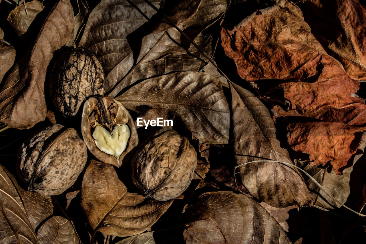 leaf, plant part, dry, no people, nature, leaves, close-up, autumn, day, change, vulnerability, full frame, fragility, backgrounds, plant, leaf vein, outdoors, beauty in nature, brown, natural pattern, dried, wilted plant