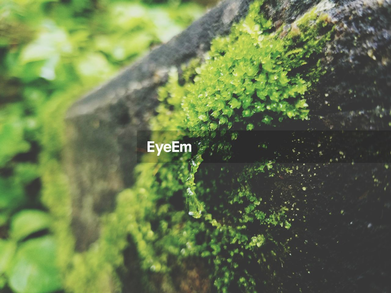 growth, green color, nature, plant, no people, outdoors, day, close-up, tree, focus on foreground, moss, beauty in nature, lichen, fern, freshness