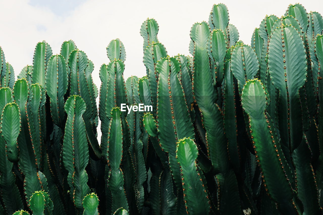 Close-Up Of Cactus Plants Against Sky