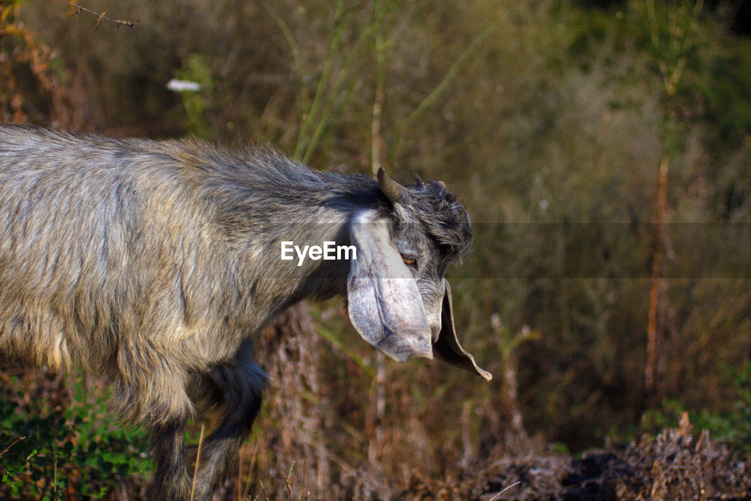 SIDE VIEW OF AN ANIMAL