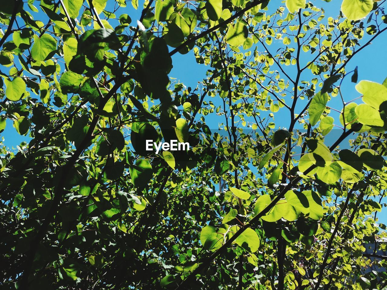 growth, plant, low angle view, leaf, plant part, tree, nature, sky, sunlight, green color, no people, beauty in nature, day, branch, outdoors, freshness, tranquility, yellow, sunny, flowering plant