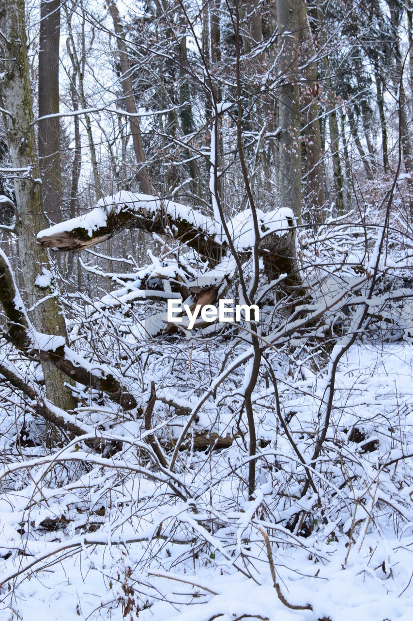 snow, winter, cold temperature, nature, forest, tree, no people, weather, outdoors, tranquility, beauty in nature, day, landscape, branch, scenics, bare tree, sky