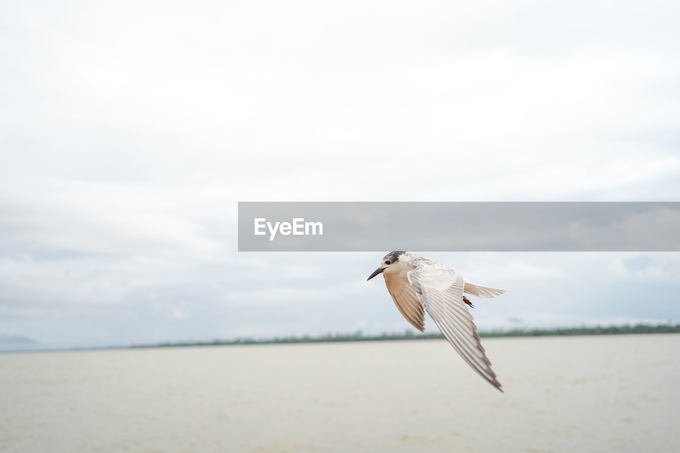 SEAGULL FLYING OVER A BIRD