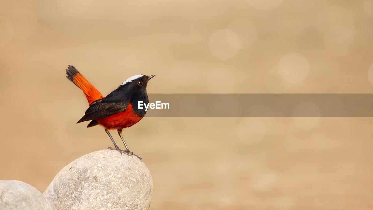 Close-Up Of Bird Perching On Stone