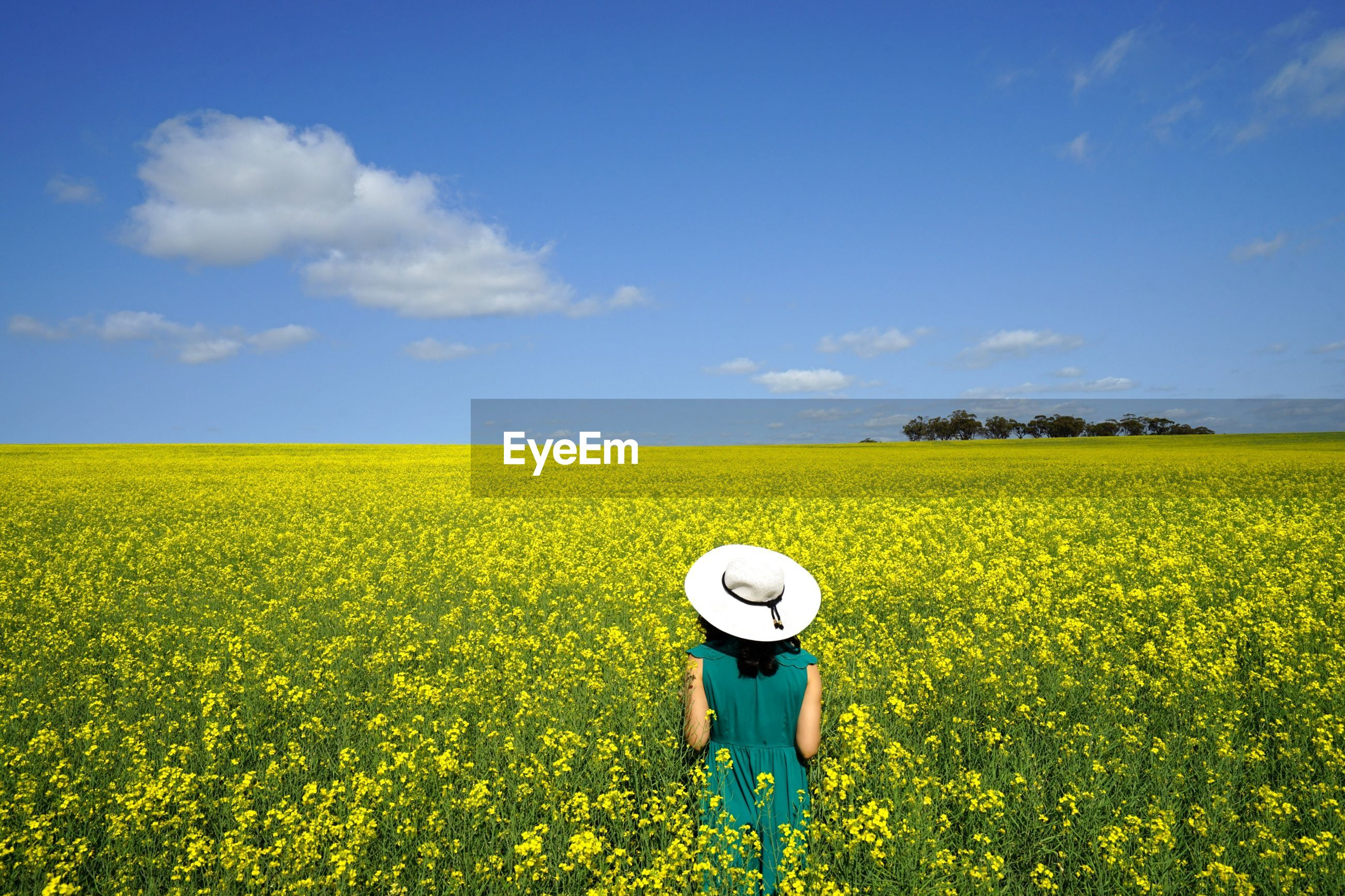Rear view of woman standing amidst flowers against blue sky during sunny day
