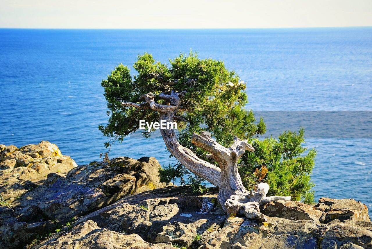 sea, water, horizon over water, horizon, tranquility, sky, scenics - nature, tranquil scene, rock, plant, nature, rock - object, beauty in nature, solid, day, tree, no people, beach, idyllic, driftwood